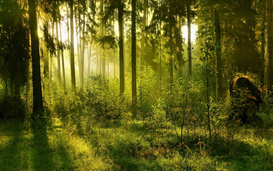 http://www.zavodrajem.cz/wp-content/uploads/2017/08/Earth-forest-960x600_c.jpg